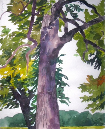 l-ross-gallery_jeanne-seagle_pecan-trees-at-long-pond-plantation_21.5x18.5