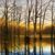 l-ross-gallery_matthew-hasty_morning-flooded-timber_36x60