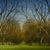 l-ross-gallery_matthew-hasty_pecan-grove-early-spring_36x48