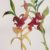 l-ross-gallery_jeanne-seagle_two-stems_15x10