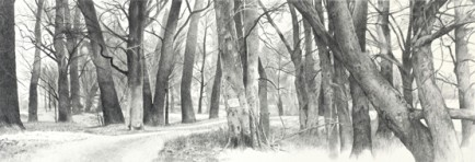 l-ross-gallery_jeanne-seagle_winter-trees_22x49