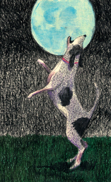 l-ross-gallery_annabelle-meacham_dog-and-blue-moon-study_15x12